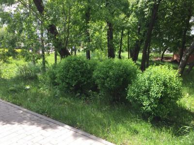 Озеленение придомовой территории - 2.jpg
