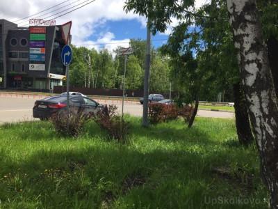 Озеленение придомовой территории - 3.jpg