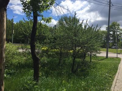 Озеленение придомовой территории - 4.jpg
