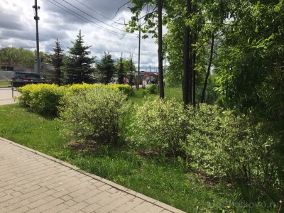 Озеленение придомовой территории - 5.jpg