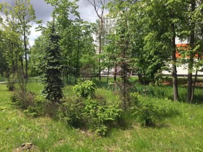 Озеленение придомовой территории - 6.jpg