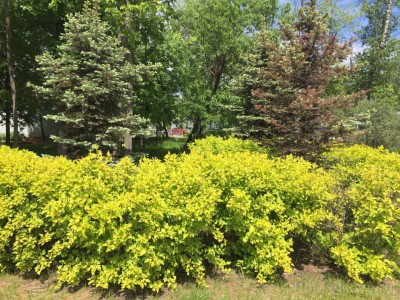 Озеленение придомовой территории - 7.jpg